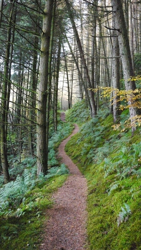 path-182628-edited